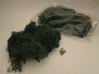 Lichene Verde Nordico